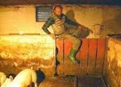 Cameron, Stevie Pickton on farm 2