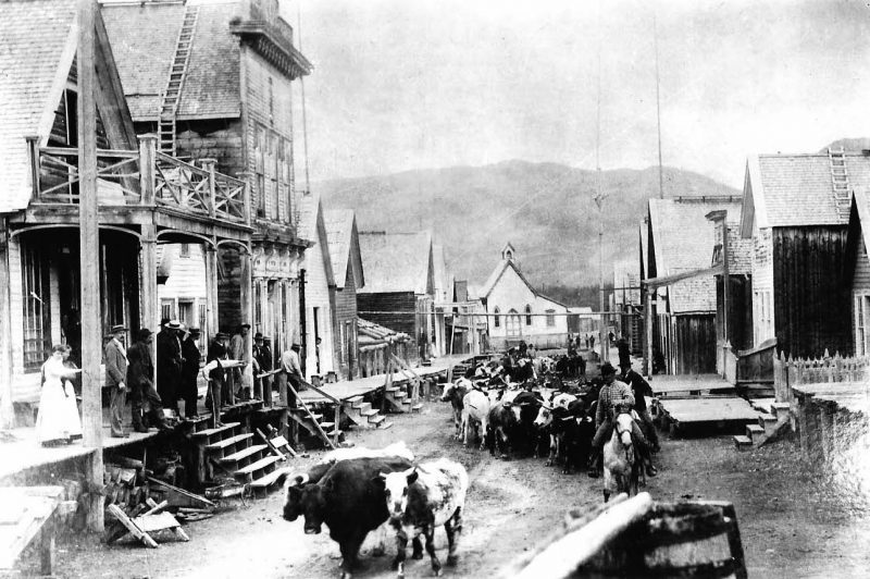 The cattle cometh | BC Booklook
